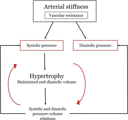 Scheme of the events occurring during normal aging, used to guide the model's parameters selection.The loop Hypertrophy–Pressure-volume relations–Systolic pressure is repeatedly carried out until stable pressures and volumes are obtained.