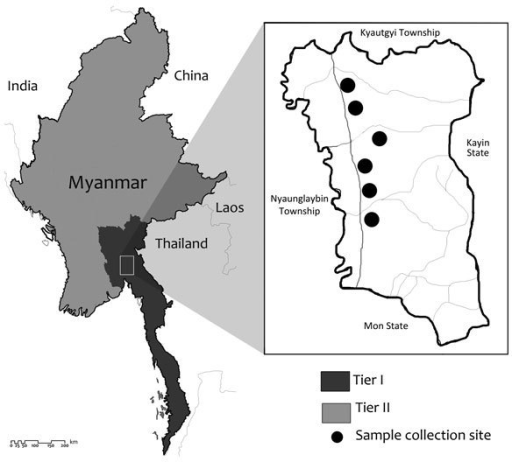 The study site, Shwegyin Township, Myanmar, where molecular evidence of drug resistance in asymptomatic malaria infections was obtained. As of 2014, Myanmar artemisinin resistance containment areas were divided into Tier I (52 townships) and Tier II (all remaining townships).