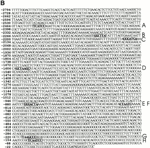 The proximal promoter sequences of PLOD-1 and Plod-2. The proximal promoter DNA sequences of the human PLOD-1 (A) and mouse Plod-2 (B) are shown. PITX2 binding elements are in bold. The corresponding binding site names (A–J and A–H) are listed on the right side. The transcriptional start site of Plod-2 is not mapped, for reference purposes the 5′-most nucleotide of the cDNA (available from GenBank/EMBL/DDBJ under accession no. NM_011961) is used as +1. Bicoid-like and bicoid elements are in bold and boxed. In A, ApaI restriction sites are underlined. CAAT and TAATAA sequences are underlined with thick lines. These sequence data are available from GenBank/EMBL/DDBJ under accession nos. AF081786 (PLOD-1) and AF283255 (Plod-2).