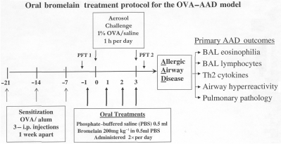 Bromelain treatment protocol. Each animal was sensitized with 3 OVA-Alum i.p. injections 1 week apart (−21 days, −14 days, −7 days). Six days after the third injection (−1 day) each animal received either Bromelain (200 mg/kg) in 0.5 ml of phosphate buffered saline (PBS) or 0.5 ml PBS alone via gavage (orally). Treatment was administred twice daily (6–8 h apart) for 4 consecutive days. Animals were challenged with 1% OVA in saline for 1 h per day (0–3). All animals were sacrificed 12 h after the last treatment (day 3) and the primary AAD outcomes assessed.