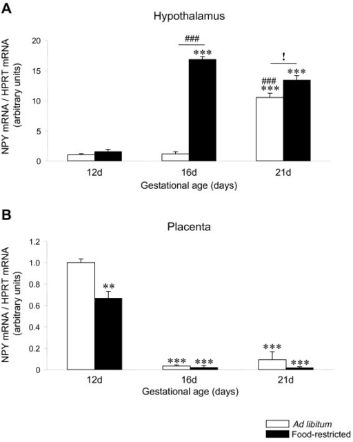 NPY expression in hypothalamus and placenta of ad libitum fed and food-restricted rats. Relative NPY mRNA levels in (A) hypothalamus and (B) placenta from ad libitum fed or food-restricted female rats at different pregnancy stages (12, 16 and 21 days). Relative mRNA levels were normalized to ad libitum fed (control) as 1. **: P < 0.01 vs. ad libitum 12d; ***: P < 0.001 vs. ad libitum 12d; ###: P < 0.001 vs. ad libitum 16d; !: P < 0.05 ad libitum 21d vs. food-restricted 21d.
