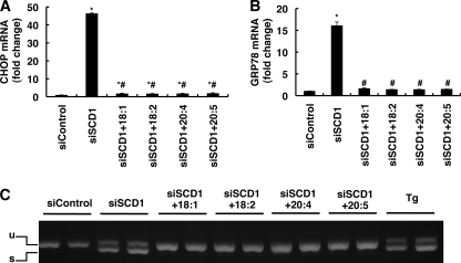 Polyunsaturated fatty acids suppress UPR induced by SCD1 knockdown. HeLa cells were transfected with the indicated siRNA. 48 h after transfection cells were further incubated for 24 h in media supplemented with the indicated fatty acid (50 μm) and then harvested. A and B, expression of CHOP (A) and GRP78 (B) mRNAs detected by real-time PCR is shown. The expression level of each gene was normalized to the GAPDH gene and is represented as -fold induction over siControl. C, semiquantitative reverse transcription-PCR analysis of XBP1 spliced and unspliced mRNA. The positions of the unspliced form (u) and spliced form (s) are indicated. Thapsigargin-treated cells (Tg) were used as a positive control. The asterisks indicate significant differences compared with siControl-transfected cells (p < 0.01), and the number symbols indicate significant differences compared with siSCD1-transfected cells which were untreated (p < 0.01).