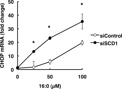 SCD1 knockdown increases palmitic acid-induced UPR. At 48 h after siRNA transfection, cells were further incubated for 12 h in media supplemented with 16:0. The expression level of each gene was normalized to the GAPDH gene and is represented as -fold induction over untreated siControl. The data represent the mean ± S.E. of three experiments. The asterisks indicate significant differences compared with siControl-transfected cells (p < 0.01).