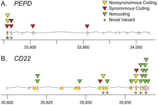 Sequence variants identified by candidate gene sequencing. Variants in PEPD (A) and CD22 (B) plotted to show their relative chromosomal positions and positions relative to gene features. Exons are indicated by the boxes above the x-axis. PEPD is transcribed right to left (minus strand) and CD22 is transcribed left to right (plus strand). Chromosomal coordinates are in kilobase pairs (kb).