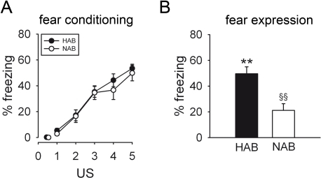 Contextual conditioned fear in HAB and NAB mice.Although freezing behaviour (assessed during each 2-min period post US presentation) increased in HAB and NAB animals in response to 5 US presentations to the same extent (A), indicating comparable fear conditioning of both lines, HAB mice displayed significantly higher fear responses than NAB mice when exposed to the conditioning context for 3 min 24 h later (B). Data are presented as means ± SEM. n = 9 per line. **p<0.01 HAB vs. NAB, §§p<0.01 fear expression vs. last US presentation.