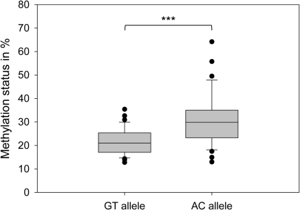 Allele-specific DNA methylation at MCHR1.The box plot shows average methylation levels of the GT and the AC allele observed in 49 individuals, comprised of 18 homozygous for GT, 13 homozygous for AC and 18 heterozygotes. The median methylation level for the GT allele is 20.9% and for the AC allele 29.9%. This difference is significant (***: P<0.001, Mann-Whitney-test). The methylation analysis was done by PCR on bisulfite treated DNA. PCR products were cloned and sequenced. We analyzed on average 41 clones per individual. The methylation level for each allele per individual was calculated by dividing the number of methylated sites in all clones harboring the respective allele by the number of possible methylation sites.