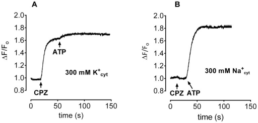 Effect of CPZ on oxonol VI fluorescence in the presence of 10 folds ion gradient across liposomal membrane.Liposomes were equilibrated with either 300(A) or 300 mM NaCl (B). The medium contained 30 mM histidine, 2 mM MgCl2 and 20 µl proteoliposomes. CPZ was added first, followed by 75 µl Tris-ATP, as indicated by the arrows.