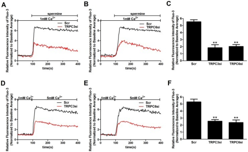 TRPC3 and TPRC6 are involved in the CaSR agonist-induced [Ca2+]i increase.[Ca2+]i dynamics were monitored by Fura-3 fluorescence methods. (A, B) Representative traces showing that transfection with TRPC3 siRNA (A) or TRPC6 siRNA (B) significantly inhibit the 3 mM spermine-induced [Ca2+]i increase (p<0.05 vs. Scr, n = 5), respectively, in contrast with cells transfected with scrambled siRNA. (C) Summary of data showing that transfection with TRPC3 siRNA or TRPC6 siRNA significantly inhibits the average value of the plateau of the 3 mM spermine-induced [Ca2+]i increase (**p<0.01 vs. Scr, n = 5), respectively. (D, E) Representative traces showing that transfection with TRPC3 siRNA (D) or TRPC6 siRNA (E) significantly inhibits the 5 mM [Ca2+]o-induced [Ca2+]i increase (p<0.05 vs. Scr, n = 5), respectively, in contrast with cells transfected with scrambled siRNA. (F) Summary of data showing that transfection with TRPC3 siRNA or TRPC6 siRNA significantly inhibits the average value of the plateau of the 5 mM [Ca2+]o-induced [Ca2+]i increase (**p<0.01 vs. Scr, n = 5), respectively. Data are shown as the means ± SEMs. The results were from at least three independent experiments, and each experiment measured 20 to 40 cells.