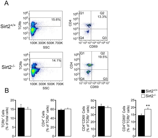 CD4+CD69+ T cells are increased in mesenteric lymph nodes from Sirt2−/− mice with DSS-induced colitis.(A) Representative images of FACS analysis demonstrating TCRb+ cells (left), and their composition sorted by CD4 and CD69 staining (right). (B) The composition of MLNs is compared between Sirt2+/+ and Sirt2−/− mice; TCRb+, CD4+, CD4+CD69−, and CD4+CD69+ cells. n = 10/group. Results are expressed as the mean ± SEM. *P<0.05; **P<0.01; ***P<0.001.