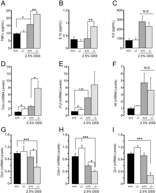 Plasma cytokine levels and cytokine mRNA levels in the colon of Sirt2−/− mice with DSS-induced colitis.(A–C) Measurements of serum cytokine levels in Sirt2+/+ (+/+) and Sirt2−/− (−/−) mice after DSS-induced colitis; TNFα (A), IL1β (B), and IL6 (C). (D–E) Cytokine mRNA levels in the colon of Sirt2+/+ and Sirt2−/− mice before and after DSS-induced colitis. Tnfα (D), Il1β (E), and Il6 (F). (G–H) mRNA levels of the genes related to maintenance of intestinal permeability, Ocln (G), Cldn1 (H), Zo1(I) in Sirt2+/+ and Sirt2−/− mice with or without DSS treatment. n = 10/group (with DSS treatment); n = 5/group (without DSS treatment). Results are expressed as the mean ± SEM. *P<0.05; **P<0.01; ***P<0.001.