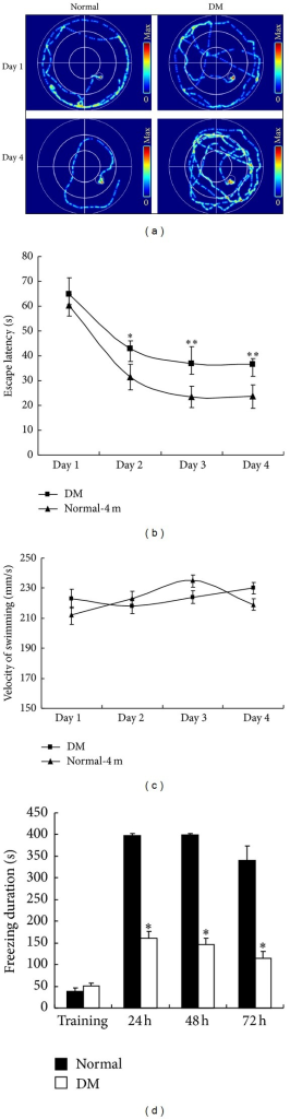 Evaluation of the cognition of diabetic rats at 4 months after STZ injection. (a) Representative traces by the Morris water maze. The performance of rats in the Morris water maze using hidden platform training for 4 d was assessed based on (b) escape latency and (c) swimming velocity in the normal and DM groups. (d) Freezing duration was measured using inhibitory avoidance box. *P < 0.05, significant difference compared with the age-matched control rats; **P < 0.01, significant difference compared with the age-matched control rats; n = 12.