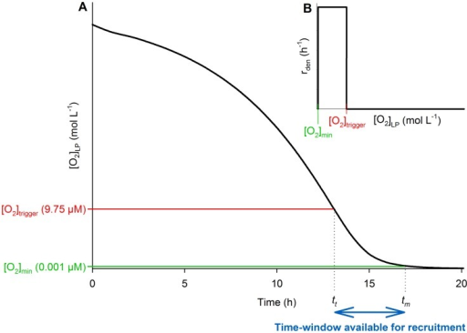 Modelling of (h−1) as a function of .A. The panel shows the O2 concentration in the liquid-phase  falling as a result of aerobic respiration. B. The panel shows the probability for a cell to switch to denitrification (, h−1) modelled as a function of .  (Panels A & B) is the concentration below which  is assumed to trigger (due to withdrawal of the transcriptional control of O2 on denitrification [22]), whereas  is assumed to be the concentration below which  terminates (due to lack of energy for enzyme synthesis). The double-headed arrow (at the bottom of Panel A) illustrates the limited time-window () available for the cells to switch to denitrification.