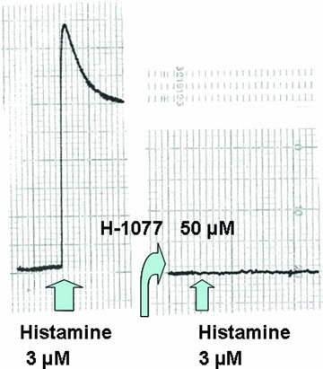 Original record of the action of ρ kinase inhibition (50 μM H-1077) on the histamine-induced force generation in rabbit saphenous vein.