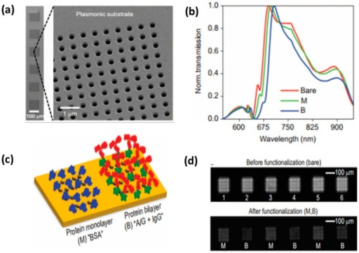 Nanohole substrate for multiplexed biosensing and lens-free imaging. (a) SEM images of 6 pixels of nanohole arrays. Each pixel is 100 µm × 100 µm with hole size 200 nm; (b) Schematic of nanohole arrays coated with different proteins: Monolayer of BSA (M), bilayer of protein and IgG (B); (c) Transmission of bare nanohole arrays (red), with protein monolayer (green) and bilayer (blue); (d) diffraction patterns of nanohole arrays before and after functionalization with protein [156].