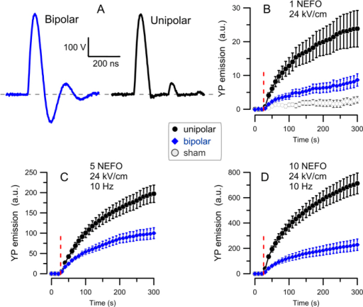 Unipolar and bipolar nanosecond electric field oscillations (A) have different potency to electroporate CHO cells (B–D).(A) The two types of NEFO have the same shape and amplitude of positive-going phases, with the first phase duration of 140 ns at 50% height. The unipolar NEFO lacks negative-going phases 2 and 4. (B–D) Electroporation is revealed by the time-lapse imaging of YP dye uptake. Cells were exposed to either 1 (A), 5 (B), or 10 (D) unipolar () or bipolar () NEFO (24 kV/cm, 10 Hz) at 28 s into the experiment (vertical dashed line). The exposure parameters are also provided in panel legends. Mean ± SE for 9–23 cells in each group. Higher dye uptake in cells exposed to unipolar NEFO was significant in all groups (p < 0.01). A common control group subjected to sham exposure (plotted in panel (B) only) showed no appreciable fluorescence gain.