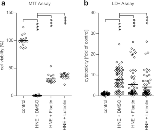 Effect of fisetin and luteolin on the HNE-induced cytotoxicity in serum-starved ARPE cells.Cytotoxicity was determined with the MTT assay (a) and the LDH assay (b). Both fisetin and luteolin (at 50 μM) improved cell survival after an exposure to HNE and the solvent DMSO. Results are shown as scatterplots with median and are combined from 4–16 independent experiments with 3–4 parallel determinations per group/experiment. ***denotes p < 0.001, Mann–Whitney U-test.