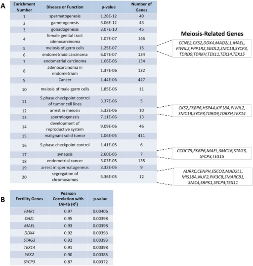 Human TAF4B expression is highly correlated with the expression of meiotic regulators.(A) Ingenuity Pathway Analysis was performed on an existing data set profiling gene expression in human fetal ovary to determine coordinate regulation of genes with human TAF4B. The top twenty most-significant enrichments from this analysis revealed many functions related to meiotic regulation including SYCP3, STAG3, YBX2, and DAZL. (B) Pearson correlations were calculated for fertility genes of interest and R2 values displayed.