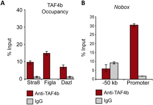 TAF4b targets the promoters of critical meiosis and oogenesis regulators.(A) Wild-type E18.5 ovarian chromatin pulled down by antibodies against TAF4b or IgG and then qPCR-amplified using primers against the proximal promoters of Stra8, Dazl, Figlα, Nobox and a non-genic region upstream of Nobox. qPCR demonstrates enriched recovery of these proximal promoters with TAF4b-precipitated chromatin relative to IgG. (B) The Nobox proximal promoter, in particular, demonstrates enrichment for TAF4b, in contrast to a non-genic region upstream of the promoter. For all analyses, data from each primer set were normalized to the E18.5 mouse ovary genomic DNA input levels and represented as a percentage of that DNA input. Each qPCR reaction was performed in triplicate and averaged. Error bars indicate the normalized standard deviation resulting from experimental triplicate qPCR reactions.
