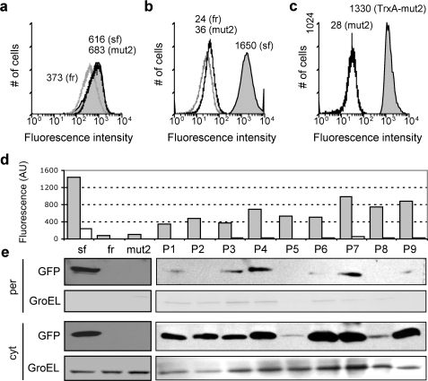 Flow cytometric analysis of GFP variants.Fluorescence histograms for cells expressing: superfolder GFP (sf, gray fill), folding reporter GFP (fr, gray line), and GFPmut2 (mut2, black line) (a) without a signal peptide and a C-terminal 6xhis tag or (b) as an N-terminal fusion to the ssDsbA signal peptide; (c) an N-terminal ssDsbA signal peptide fused to GFPmut2 (black line) and TrxA-GFPmut2 (gray fill). The geometric mean is listed next to each histogram. There was no significant difference in growth rate between any of the cultures (data not shown). (d) Fluorescence (arbitrary units) and subcellular localization of GFP as measured for cytoplasmic (cyt, grey bars) and periplasmic (per, white bars) fractions generated from cells expressing the various ssDsbA-GFP fusions including sf, fr, mut2 and clones P1–P9. (e) Western blot analysis of the per and cyt fractions of cells expressing the same fusions probed with GFP antiserum. Blots were probed with anti-GroEL serum as a fractionation marker.