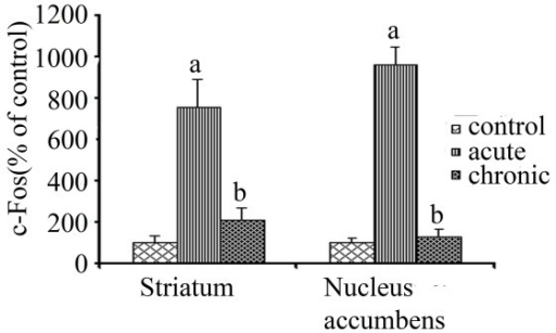 Effect of chronic drug treatment on acute c-Fos response. Western blot analysis was used to measure the acute pseudoephedrine induced c-Fos expression in striatum (n = 4) and nucleus accumbens (n = 3) of rats chronically treated with pseudoephedrine (8 day treatment of pseudoephedrine twice a day with an increasing dose at 25, 30, 35, 40 mg/kg i.p., on day 1, 2, 3 and 4–8 respectively, rats were killed 1.5 h after 40 mg/kg, i.p pseudoephedrine injection on day 9). The data (quantification of bands from western blots) is expressed as percentage of c-Fos value of control animals injected with saline. (A value of 100% indicates no difference from control) Values are mean ± S.E.M. 'a' indicates significantly different from control and chronic; 'b' indicates significantly different from acute with p < 0.05.
