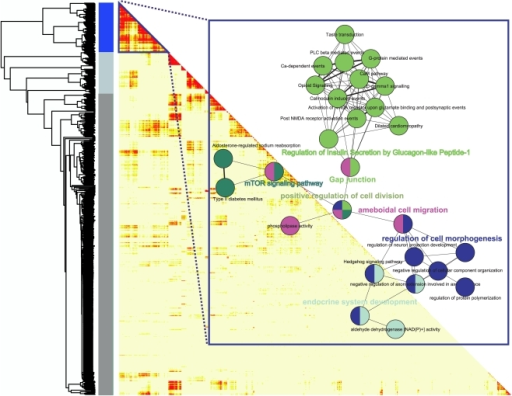 Connectivity (topological overlap) matrix for the most differentially expressed genes by the diets in the three tissues.Based on a two-way ANNOVA, 881 genes were identified to be significantly responding to changes in diet, and these genes were used for the analysis. The rows and columns of the half lower heatmap represent genes in a symmetric fashion. The connectivity strengths were signified by the color intensity, red representing the strongest connection and light yellow representing no connection. The blue color bar delineates the highest interconnected genes module. Within the rectangular frame, the functional terms that show significant enrichment within the blue module is depicted. The colors of the circles indicate the same functional module.