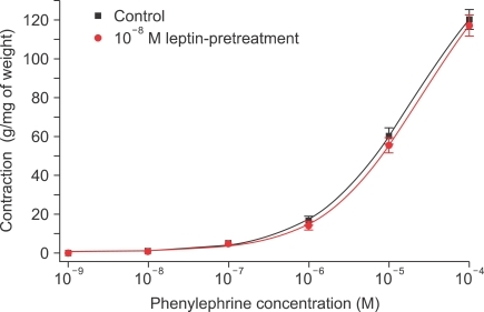 Concentration-response curves for the effect of leptin pretreatment on contraction in rabbit clitoral corpus cavernosal strips in a phenylephrine dose-dependent manner (n=8).