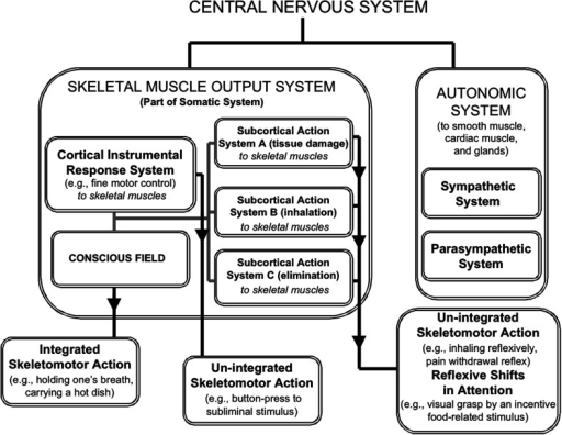 the major divisions of the nervous system and the circumscribed province of conscious processing within the