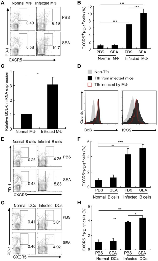 Macrophages drive Tfh cell generation.Expression of CXCR5 versus PD-1 on CD4+ T cells (gated as CD3+CD4+) after co-culture of normal mice derived CD4+ T cells with macrophages (A, B), B cells (E, F), and DCs (G, H) from normal or infected mice in the presence or absence of SEA. Numbers represent the frequency of the boxed population within the CD4+ T cell population; (C) Quantitative RT-PCR analysis of the expression of BCL-6 mRNA in CD4+ T cells cultured with or without macrophage from infected mice. ***, P<0.001; **, P<0.01; *, P<0.05 (Student's t-test); (D) The expression of Bcl6 and ICOS was evaluated as previous described in CXCR5lowPD-1lowCD4+ T cells and CXCR5highPD-1highCD4+ T cells directly isolated from S. japonicum-infected mice or in vitro induced by macrophages from S. japonicum-infected.