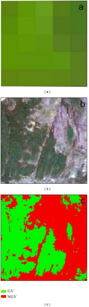 The estimation of actual fractional green vegetation cover (FV) with the 5 × 5 window surrounding each sample TM pixel from the high resolution image. (a) is the 5 × 5 pixel of TM subset with 5-4-1 band combination; (b) is the high resolution subset corresponding to the 5 × 5 pixel; (c) is the classified results of the high resolution subset. GV is the abbreviation for green vegetation, and NGV represents no green vegetation.