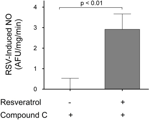 Effect of Compound C (AMPK inhibitor) on the NO response to resveratrol (n = 6, compared to vehicle).