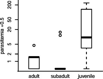 The abundance ofP. murinusgametocytes in the blood of different bat age classes. Parasitemia of M. daubentonii caught in September and October 2012. Young of the year (juveniles) have significantly higher parasitemia than older age classes. The y-axis, the number of blood parasites observed, is on a log scale. For visualisation purposes, 0.5 is added to parasitemia.
