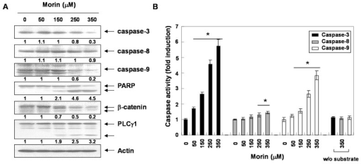 Activation of caspases and subsequent cleavage of PARP during the morin-induced apoptosis in U937 cells. U937 cells were incubated at indicated concentrations of morin for 48 h. (A) Western blot analysis for the effects of morin on the caspase activation and PARP cleavage. The membranes were probed with the anti-caspase-3, anti-caspase-8, anti-caspase-9 and anti-PARP antibodies. The expression of the indicated proteins were measured by densitometry and expressed as average relative ratio compared to actin, from two or three different experiments and (B) In vitro assay for caspase-3, -8 and -9 activity, which uses DEVD-pNA, IETD-pNA and LEHD-pNA as substrates, respectively. The released fluorescent products were measured. Data are expressed as mean ± SD of three independent experiments. (*p < 0.05 vs. control).