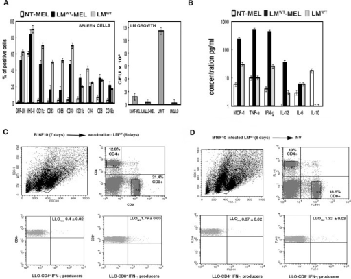 Efficiency of Listeria vaccination of melanoma is mediated by activation of LLOrec specific CD8+ T cells and inhibition of LLOrec specific CD4+ T cells.C57BL/6 female were inoculated i.p. with 5 x 105 B16F10/mice (n = 5) for 7 days and next injected i.p. or not (NT) with 5 x 103 bc/mice of GFP-LMWT strain for 3 additional days. Mice were bled and sacrificed. A, Immune cells plot (left) corresponds with spleens were homogenized and cell populations were analysed by FACS. Results were expressed as the mean of the percentages of positive cells ± SD. LM growth plot (right) corresponds with spleen homogenates examined for CFU in blood-agar plates. Results are expressed as CFU (mean ± SD) obtained with triplicate samples from three independent experiments (P< 0,05). B, Levels of pro-inflammatory cytokines (MCP-1, TNF-alfa, IFN-gamma, IL-6, IL-10, IL-12) were analysed in sera of mice using the CBA kit (Becton Dickinson) by flow cytometry. Results were expressed as cytokine concentration (pg/ml of mean ± SD, P<0,05). C, Spleen cells obtained from homogenates after inoculation with melanoma B16F10 (5 x 105 cells/mice) for 7 days and vaccination with LMWT for 5 days (LMWT-MEL). Cells were stimulated 5 h with recombinant LLO (0.1 μg/ml) in the presence of brefeldin A for intracellular cytokine staining. LLO-stimulated spleen cell surface was stained for CD4 or CD8 and fixed and permeabilized using cytofix/cytoperm kit. Stimulated cells were surface stained for CD4 or CD8 using anti-CD4+FITC-labeled or anti-CD8+APC-labelled and data gated to include histograms show the percentages of LLO-CD4+ and IFN-gamma producers (lower left) and LLO-CD8+ and IFN-gamma producers (lower right) (R2 and R3 gates). Experiments were performed in triplicate and results are expressed as the mean ± SD (p < 0.05). D, Spleen cells obtained from homogenates after inoculation with melanoma B16F10 pre-infected with LMWT (5 x 105 cells/mice) for 7 days. Cells were stimulated 5 h with recombinant LLO (0.1 μg/ml) in the presence of brefeldin A for intracellular cytokine staining. Procedures were performed as in C and results expressed as the mean ± SD (p < 0.05).