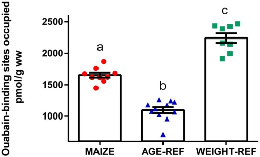 Comparison of myocardial Na+/K+-ATPase density (means ± SEM).Measurements of Na+/K+-ATPase density expressed as ouabain-binding sites in myocardial tissue of individual pigs: MAIZE (n = 9), AGE-REF (n = 11), WEIGHT-REF (n = 8).a,b,cMeans not sharing a letter in their superscript are significantly different (p<0.001). ww = wet weight.