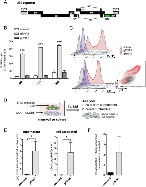 Induction of HIV replication using SAM in the J89 latency model.(A) Scheme of replication-competent HIV reporter virus in J89 clones. Transcriptional activation results in LTR-dependent eGFP expression and viral replication. (B) Components of the SAM system together with gRNA5, gRNA8 or no gRNA (control) were transiently expressed in J89 cells and proviral activation was determined by flow cytometry at 48, 72, and 96 h post transfection. Two-way ANOVA was used for statistical evaluation (in relation to control); *** signifies p<0.001. Shown are results of three independent experiments. (C) Number of J89 cells showing eGFP expression (upper panel) and cell-associated p24 expression (lower panel) at 72 h post transfection with SAM system components and gRNA5, gRNA8 or no gRNA (control). Inset shows flow cytometry contour plot of p24 and eGFP co-expression in control (grey) and SAM/gRNA5 transfected (red) cells. (D) To assess viral replication after SAM-mediated activation, J89 cells transfected with SAM components and gRNA5, were sorted for eGFP expression and co-cultured at 72 h post transfection with MOLT-4/CCR5 cells using a transwell system. (E) At 7 days post initiation of the co-culture, levels of gag RNA in co-culture supernatants and MOLT-4/CCR5 cells (cell-associated) were measured using ddPCR. Co-culture of non-transfected J89 cells with MOLT-4/CCR5 cells served as control (untreated). Mann-Whitney U test was used for statistical evaluation (in relation to untreated); * signifies p<0.05. (F) At 12 days post initiation of the co-culture, cell-associated LTR DNA content was determined in MOLT-4/CCR5 cells. Levels are shown as fold increase of LTR sequences per cell over untreated control. Shown are results of two independent experiments (E, F).