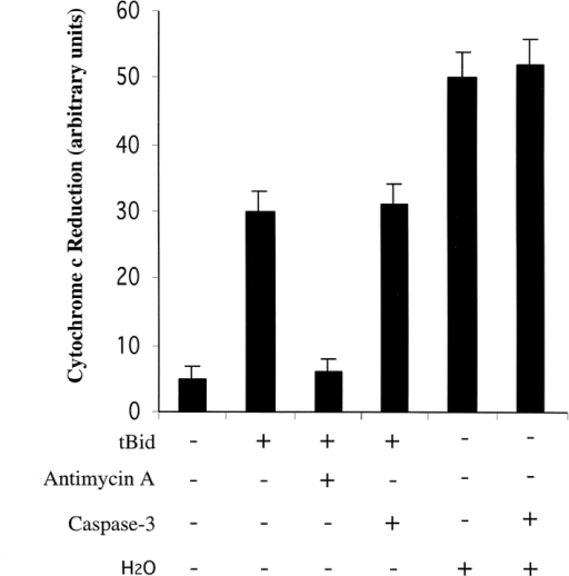 Caspase-3 does not destroy the capacity of complex III to reduce cytochrome c. Isolated mitochondria (500 μg) were incubated in the presence of tBid (25 μg/ml), caspase-3 (25 μg/ml), and/or antimycin A (1 μM) as indicated for 60 min at 37°C. As a control, 500 μg of mitochondria were incubated in water for 20 min at 4°C then incubated ± caspase-3. Reduction of exogenous cytochrome c by complex III was measured as described in Materials and methods.