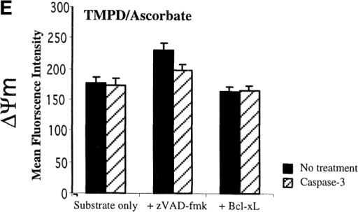 Caspase-3 treatment of permeabilized cells causes loss of ΔΨm. (A) MEFs from wild-type or Bid−/− cells were permeabilized with digitonin and incubated in the presence of caspase-3 (0.5 μg/ml), tBid (20 μg/ml), and/or cytochrome c (100 μM) as indicated plus TMRE at 37°C for 30 min in the presence of succinate as substrate. (B–E) Permeabilized HeLa cells (106) were incubated with or without caspase-3 (0.5 μg/ml) in the presence of cytochrome c (100 μM) and TMRE with or without zVAD-fmk (100 μM) or BclXL-Δc (20 μg/ml) as indicated. (B) ΔΨm generated by the incubation of permeabilized cells with the substrates. (C) Effect of caspase-3 on ΔΨm in the presence of malate/palmitate. (D) Effect of caspase-3 on ΔΨm in the presence of rotenone and succinate. (E) Effect of caspase-3 on ΔΨm in the presence of antimycin A and TMPD/ascorbate. Substrates and inhibitors were added at the concentrations described in the legend to Fig. 3 B. Cells were analyzed for ΔΨm by flow cytometry. In each case, the MFI for cells treated with FCCP to dissipate ΔΨm was set as 0.