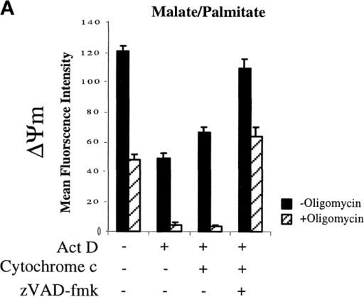 Apoptotic cells maintain ΔΨm in the presence of TMPD/ascorbate but not in the presence of malate/palmitate or succinate as substrates. HeLa cells were treated with or without 0.3 μM actinomycin D (18 h), permeabilized with digitonin, and incubated with the indicated substrates. Oligomycin (10 μg/ml) was added as indicated. Cells were stained with TMRE and analyzed by flow cytometry. (A) Malate/palmitate; (B) rotenone and succinate; (C) antimycin A and TMPD/ascorbate. Concentrations for inhibitors and substrates were the same as for the experiment in Fig. 3 B. Cells were analyzed for ΔΨm by flow cytometry. In each case, the MFI for cells treated with FCCP to dissipate ΔΨm was set as 0.