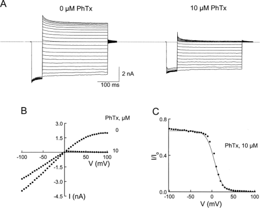 Channel block by intracellular PhTx. (A) Current traces recorded in the absence or presence of 10 μM PhTx. The voltage protocol was as for Fig. 3. (B) I-V curves in the absence or presence of 10 μM PhTx. (C) The fraction of current not blocked by 10 μM PhTx is plotted against membrane voltage. The curve is a fit of the Woodhull equation, I/Io = 1/(1 + [PhTx]/Kde−ZF V/RT). During the fit, the current at a given voltage was normalized to the value at −100 mV. The values of Kd and Z determined from the fits are 21.3 ± 0.4 μM and 2.8 ± 0.1 (mean ± SEM, n = 3), respectively.