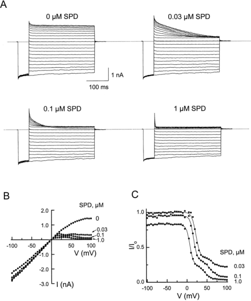 "Channel block by intracellular spermidine. (A) Current traces recorded in the absence or presence of various concentrations of spermidine. The voltage protocol was as for Fig. 3. (B) I-V curves in the absence or presence of various concentrations of spermidine. (C) The fractions of current not blocked by spermidine are plotted as a function of membrane voltage. The curves are fits of . For each fit, the current at a given voltage was normalized to the value at −100 mV. The parameters determined from the fits are: Ka1 = 6.7 (±0.6) × 10−6 M, Za1 = 5.0 ± 0.1; ka−2/ka−1 = 3.2 (±0.7) × 10−2, ""za−1 + za−2"" = 5.1 ± 0.1; Kb1 = 2.9 (±0.3) × 10−5 M, Zb1 = 3.2 ± 0.1; kb−2/kb−1 = 3.0 (±0.6) × 10−3, ""zb−1 + zb−2"" = 3.4 ± 0.1 (mean ± SEM, n = 9)."