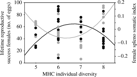 Graph combining the female LRS (shown as representative number of eggs) and SSI as a function of MHC II B diversity. Females with an intermediate MHC II B diversity having the highest reproductive success are shown by black circles (neggs=38.38+4.514nMHCIIB−11.98(nMHCIIB−6.481)2, F2,26=4.63, p=0.02). Females with an intermediate MHC II B diversity having the lowest SSI, representing a better immunocompetence status, are shown by grey circles (SSI=−0.193+0.02nMHCIIB+0.057(nMHCIIB−6.536)2, F2,26=6.698, p=0.004).