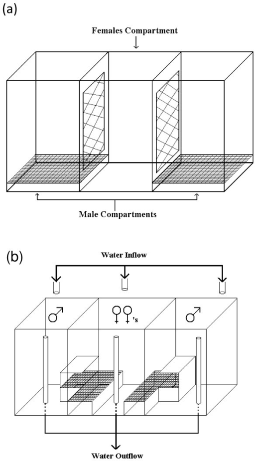 Experimental set up for experiment 2. Control and monochromatic light experiments (a), and visual-only experiment (b). Males in the two end compartments courted females from the central compartment.