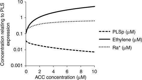 Increase in ACC increases both endogenous ethylene and the concentration of the activated form of auxin receptor, Ra*. Ethylene and Ra* contribute antagonistically to PLS expression, with the overall effect of increase in exogenous ACC is predicted to be the decrease in PLS expression.