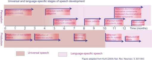 Universal and language-specific stages of development for speech perception and speech production in typically developing human infants from birth to 1 year.