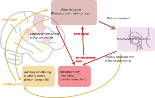 A Schematic Diagram Of Motor Sensory Systems Involved Open I