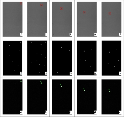 Black foreign particle segmentation with back illumination (1-5) sequential images every 200 ms (the carbide is labeled with red rectangle). (i-v) Segmentation results with Canny operator. (a-e) Segmentation results with modified PCNN (falling black objects are labeled)