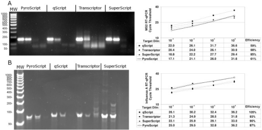 Comparison of 3173 Pol (PyroScript) RT-PCR mix with two enzyme RT-PCR systems in detection of MS2 and influenza A.Ten-fold serial dilutions of an MS2, an influenza A RNA preparation and a water only control (NTC) were amplified by one-step RT-PCR reagent mixes (PyroScript, qScript (Quanta), Transcriptor (Roche), and SuperScript (Invitrogen), as indicated. A. MS2 detection. Left panel: 2% agarose gel, each group of four wells are 10−4, 10−6, 10−7-fold target dilutions and NTC, MW is 100 bp DNA ladder (50 bp smallest band). Right Panel: RT-qPCR analysis of 10−3, 10−4, 10−5, and 10−6-fold target dilutions. B. Influenza A RNA detection. Left panel: 4–20% gradient polyacrylamide gel, each group of three wells are 10−6, 10−7-fold target dilutions and NTC, MW is 25 bp DNA ladder (50 bp smallest band). Right Panel: RT-qPCR analysis of 10−3, 10−4, 10−5, and 10−6-fold target dilutions.