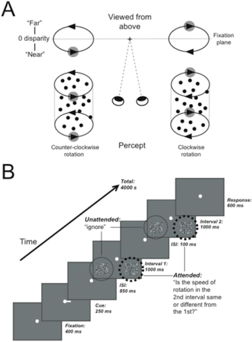 Stimuli and experimental paradigm.A: Structure-from-motion cylinders disambiguated by binocular disparity are perceived as rotating counter-clockwise (bottom left) or clockwise (bottom right) as controlled by the disparity of the right and left-wards moving surfaces (adapted from Dodd et al., 2001). B: Schematic diagram of the behavioral task used in the MRI-scanner, illustrating an example trial where attention is cued to the right side. For cued cylinders, participants reported whether the speed of rotation in the 1st and 2nd interval was different, while uncued cylinders were ignored.