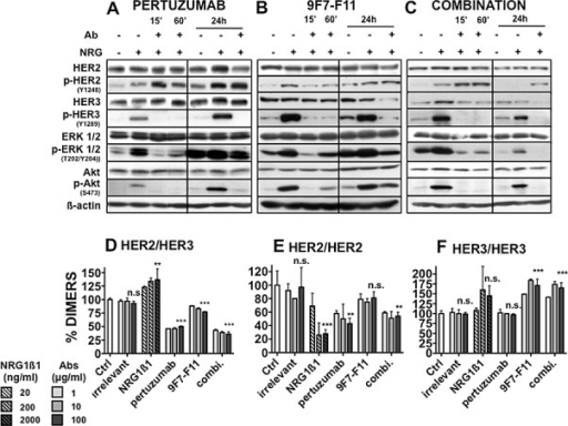 "Effect of pertuzumab and of the anti-HER3 antibody 9F7-F11 on HER2, HER3 and downstream signaling pathways in BxPC-3 cellsCells were pre-incubated with pertuzumab [A], 9F7-F11 (B) or both antibodies (C) (50 μg/ml/each antibody for the indicated time) and then with 100 ng/ml NRG1ß1 for 10 minutes. The expression level of phosphorylated and total HER2, HER3, AKT and ERK was then analyzed by western blotting. Effect of pertuzumab and 9F7-F11 on (D) HER2/HER3, (E) HER2/HER2 and (F) HER3/HER3 dimer formation in NIH/3T3 HER2/HER3 cells. 105 cells/well were incubated with increasing concentrations (1 to 100 μg/ml) of antibodies in serum-free medium for 30 minutes. The TR-FRET signal was expressed as Delta F665 (%) and then as dimer percentage (see ""Materials and Methods""). Data are the mean ± SEM of 3 experiments performed in triplicate. P, ***<0.001, ** p < 0.01, n.s., not significant."
