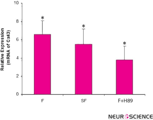 Fluoxetine effects on Cx43 mRNA expression with and without cAMP-PKA signaling pathway. 1321N1 cells treated with F (Fluoxetine), SF (AC inhibitor+ Fluoxetine) and F + H89 (Fluoxetine + PKA inhibitor) for 24 hours and changes in transcript amount expression were determined by real-time qPCR. It revealed an up-regulation of Cx43 in all of groups (*p < 0.01 compared to untreated controls).